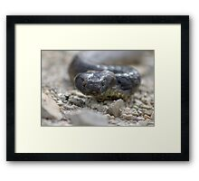 Reptile Rapture Framed Print