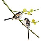 Long-Tailed Tits by Maureen Sparling