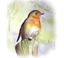 Robin by Maureen Sparling
