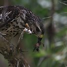 lunchtime by kathy s gillentine