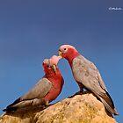 Australian Birds & Flowers - by Malcolm Katon by Malcolm Katon
