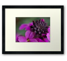 Wall Flower Seeds. Framed Print