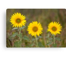 Sunflower and the snail! Canvas Print