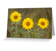 Sunflower and the snail! Greeting Card