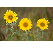 Sunflower and the snail! Photographic Print