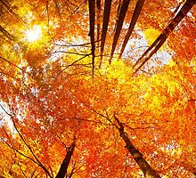 Colorful Forest in Autumn by giof