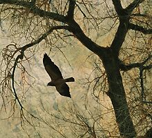 Flight of the Hawk by Donna Ridgway