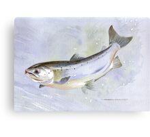 Leaping Salmon Metal Print
