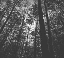 Black and white Forest by giof