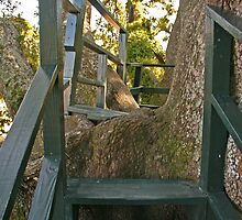 Come into my treehouse... by Carlanne McCrystal