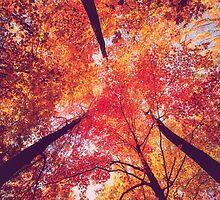 Forest in Autumn by Giorgio Fochesato