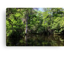 Big Cypress Swamp Canvas Print