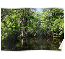Big Cypress Swamp Poster