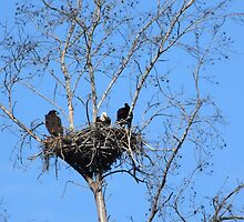 the eagle family by kathy s gillentine