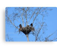 the eagle family Canvas Print