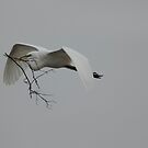 nest building by kathy s gillentine