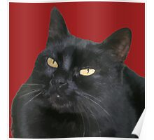 Relaxed Black Cat Portrait Vector Isolated Poster