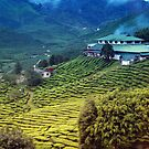 Quaint house in exotic tea plantation II by hazelong
