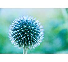 Spike Blue Photographic Print