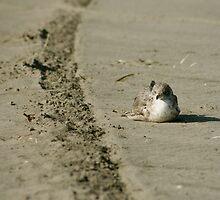 Seagull by dbrown