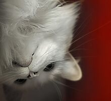 Upside Down Kitty by ibjennyjenny