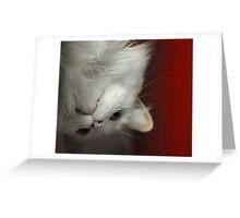 Upside Down Kitty Greeting Card