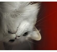 Upside Down Kitty Photographic Print