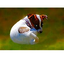 Jack Russell, but my name is Narlia   Photographic Print