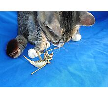 Young Male Tabby Cat Playing With It's Prey Photographic Print