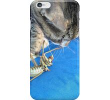 Young Male Tabby Cat Playing With It's Prey iPhone Case/Skin