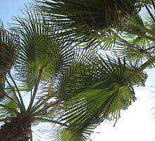 Palms in Paradise by Rosie Connor