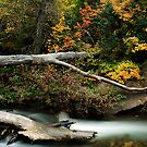 American Fork River - Autumn by Ryan Houston