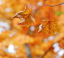 Autumn Bokeh by photographyjen