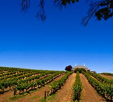 Barossa Vineyard - South Australia by Paul Gilbert