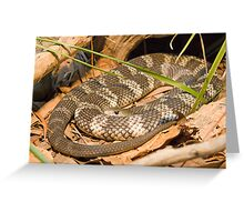 Eastern Tiger Snake, Queensland, Australia Greeting Card
