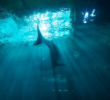 Whale Shark by jfunk