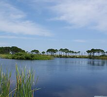 Gator Lake by Billy Gallamore