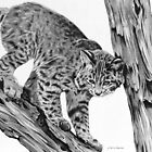 Bobcat by J.D. Bowman
