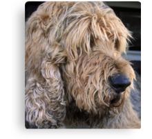 ..an otterhound.. Canvas Print