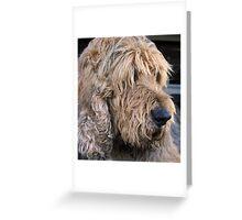 ..an otterhound.. Greeting Card