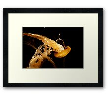 Diving Jelly Framed Print