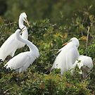 Great Egrets by kathy s gillentine