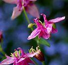 Pretty in Pink... by Larry Llewellyn