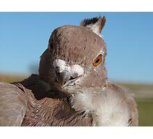 Mr. Pigeon Photographic Print