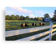 Cows Grazing In Grass Canvas Print