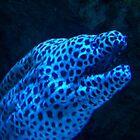 eel by seemyshots