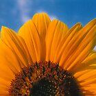 Rising Sun by Rachel Broten