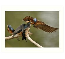 Feeding Swallows Art Print