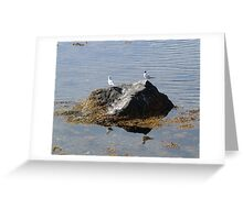Gulls On A Rock Greeting Card