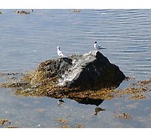 Gulls On A Rock Photographic Print